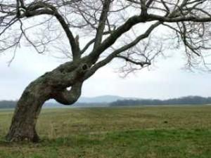 treesmall-300x225