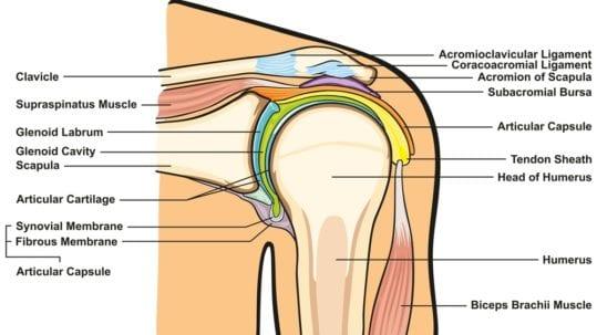 image of shoulder joint